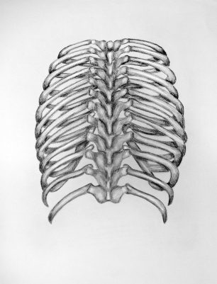 Ribcage - charcoal on paper