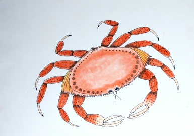 Dungeness Crab - ink and chalk pastel on paper