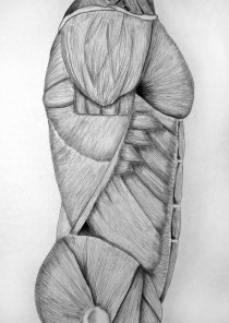 Torso - charcoal on paper
