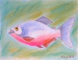 Red-Bellied Piranha - ink and chalk pastel on paper